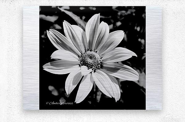 Daisy in bw  Metal print