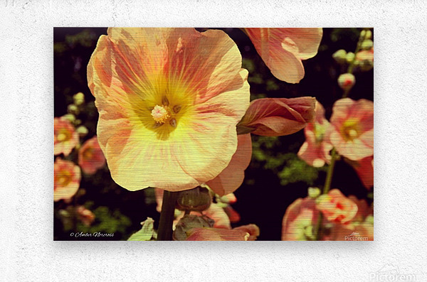 Mid Summer Blossom  Metal print