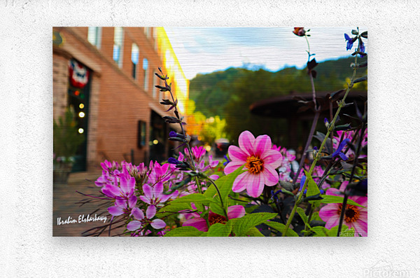 Beautiful pink and purple flowers in European city  Metal print