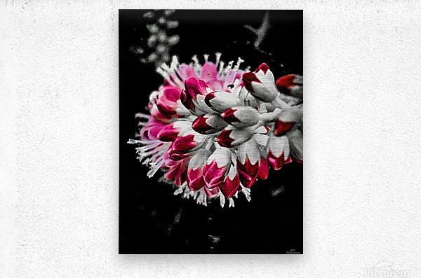 Pink Tree   Impression metal