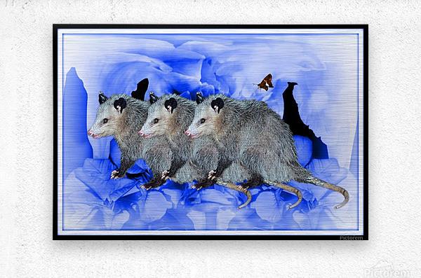 Party Of Possums  Metal print