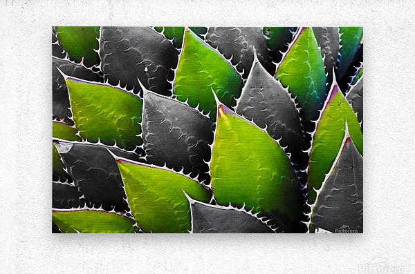 Thorny  Metal print