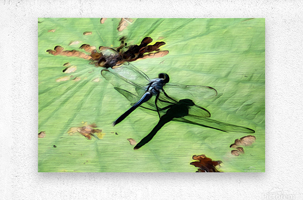 Dragon Fly  Metal print