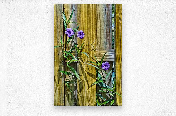 Fence Flowers 1  Metal print