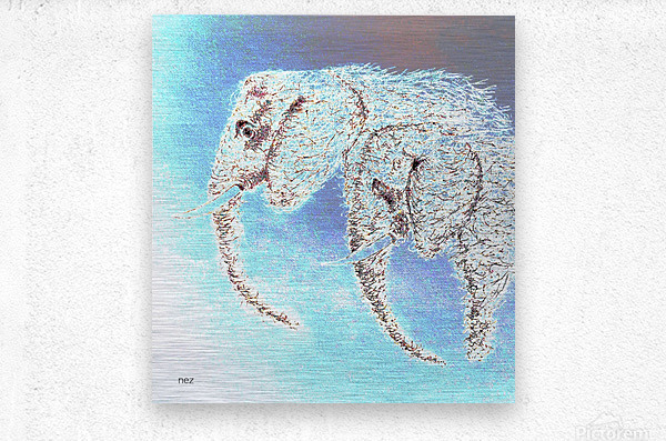 2 Elephants  Metal print