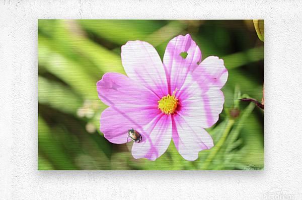 Flower Bug  Metal print