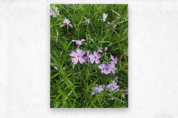 Purple Wild flowers  Metal print