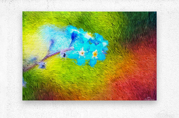 Forget Me Nots In The Wild   Metal print