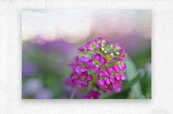 Pink Flowers Soft Photography  Metal print