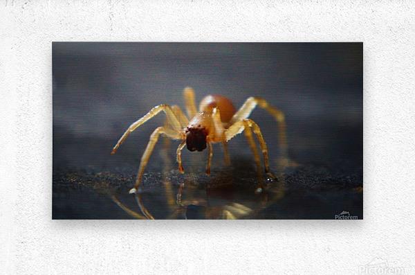 Best spider leg forward  Metal print
