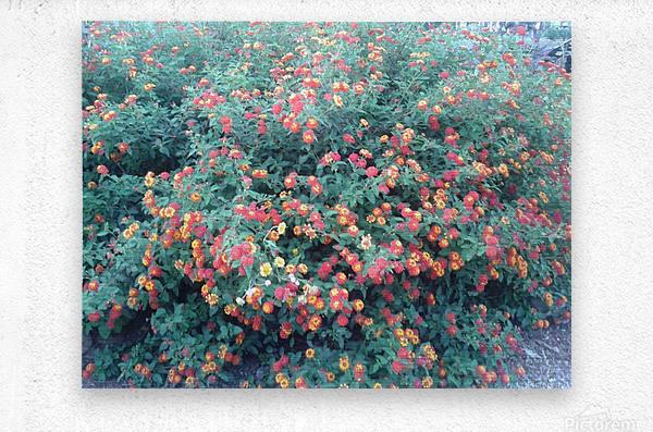 Summer red flowers  Metal print