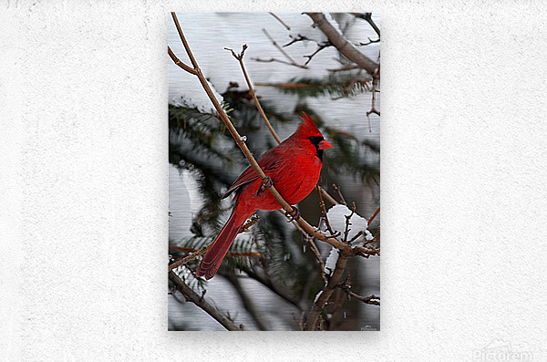 Vertical Cardinal  Metal print