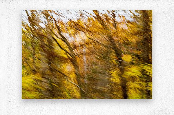 Foliage Blur  Metal print