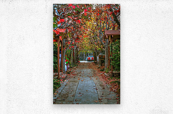 Fall in the city  Metal print
