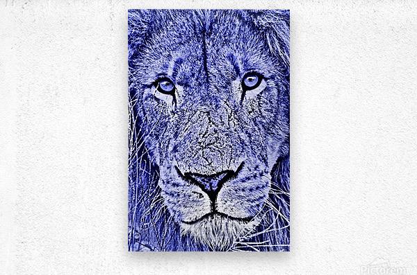 Male Lion Face thula art 5  Metal print