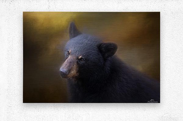 Black Bear Portrait  Metal print