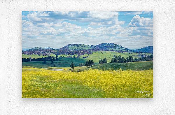 Custer State Park Yellow  Metal print