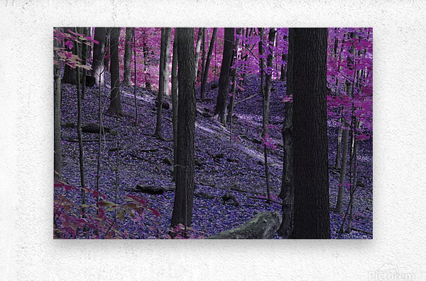 Purple Forest  Metal print