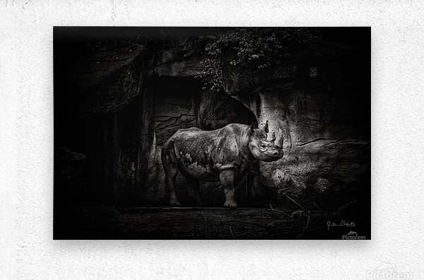 Rhino in Black & White  Metal print