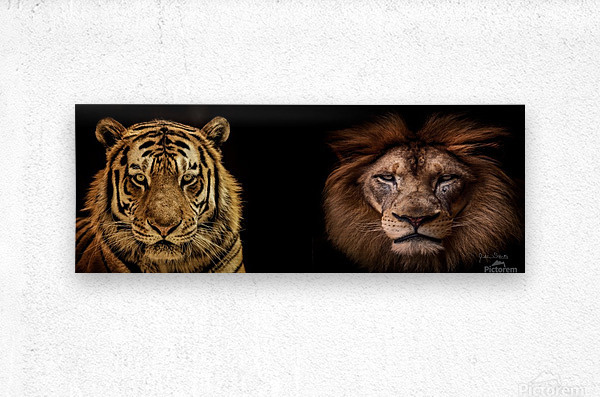 The Kings of Beasts - No Title  Metal print