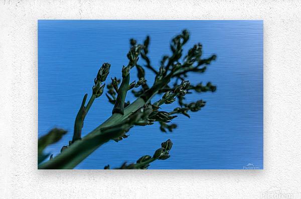 Yucca Skies  Metal print