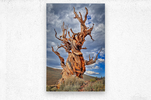 Great Witness of Time  Metal print