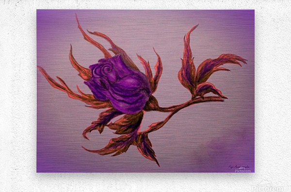 Decorative Wild Rose  Metal print