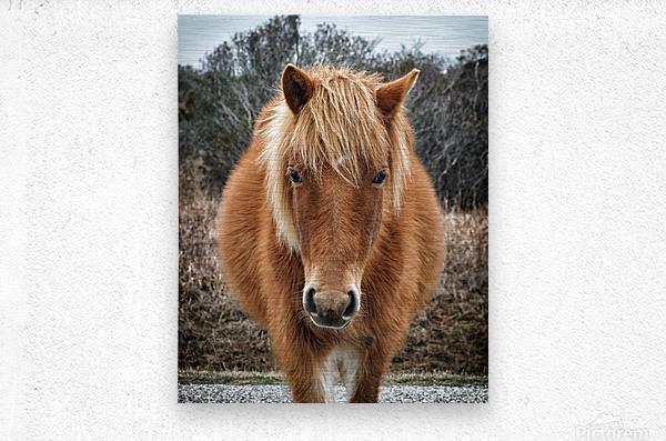 Assateague Horse Miekes NoeLani  Metal print