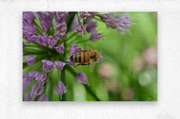 Bees & Flowers Photography  Metal print