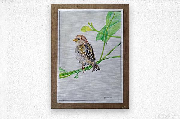 Sparrow_DKS  Metal print