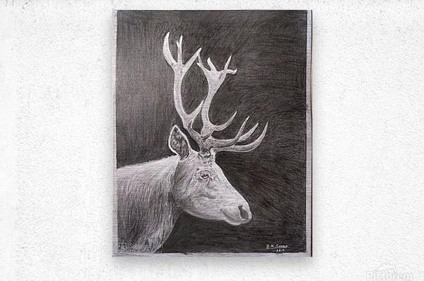 Stag_DKS  Metal print