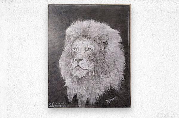 Lion_DKS  Metal print