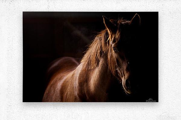 Studio Horses  Metal print