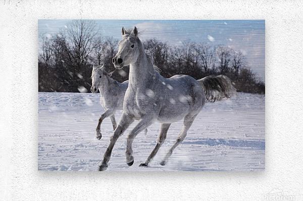 Horses in the Snow  Metal print