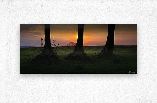 Tree trunks at Ravenhill park  Metal print