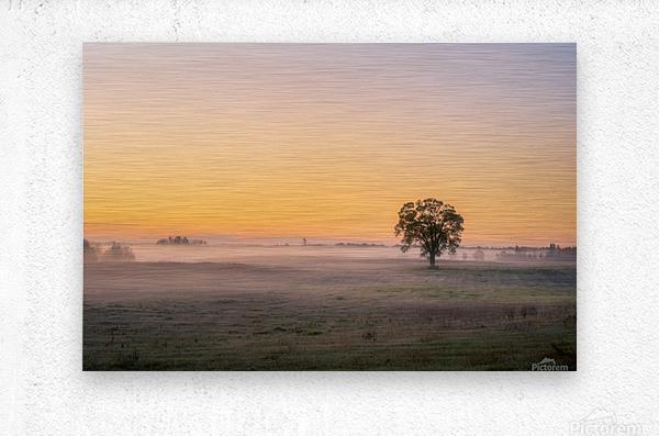 Moring Fog  Metal print