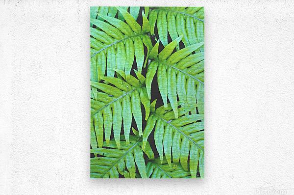 Fern Leaves  Metal print