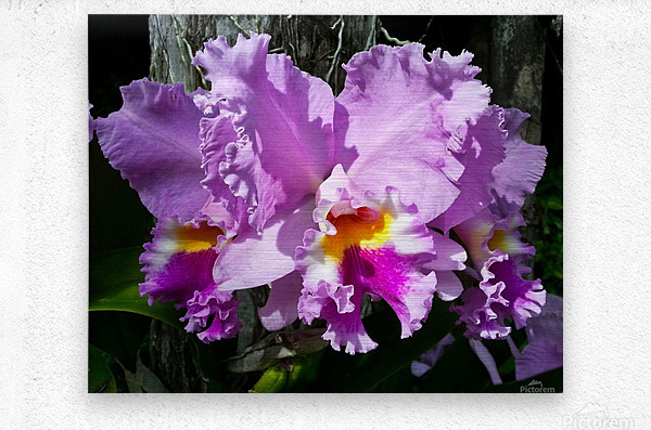 Frilly Orchid  Metal print