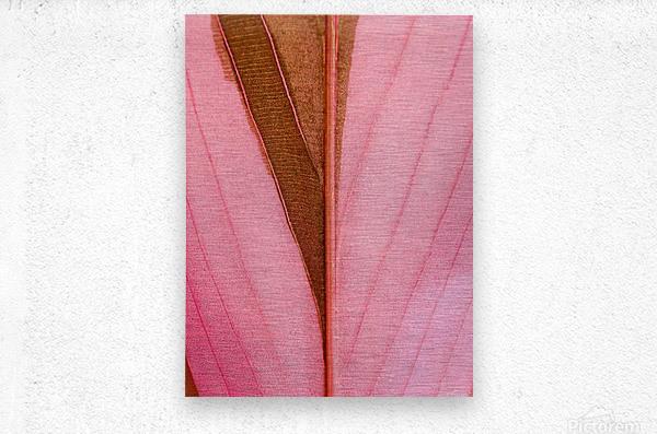 Macro Leaf  Metal print