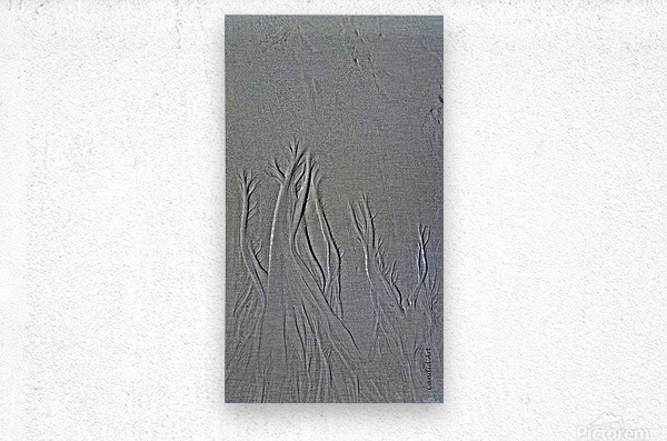 Trees in the sand 2  Metal print