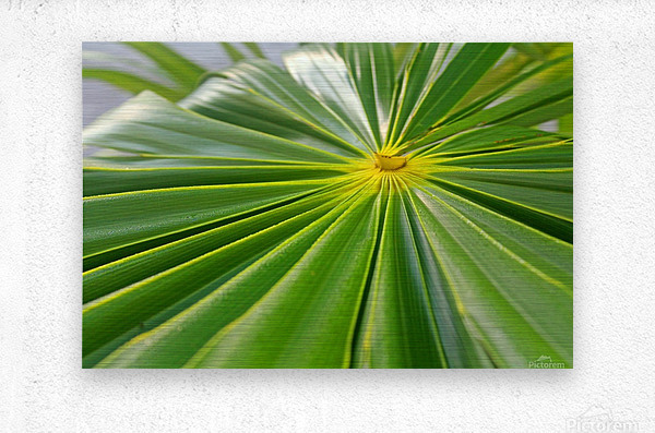Beautiful Green  Metal print