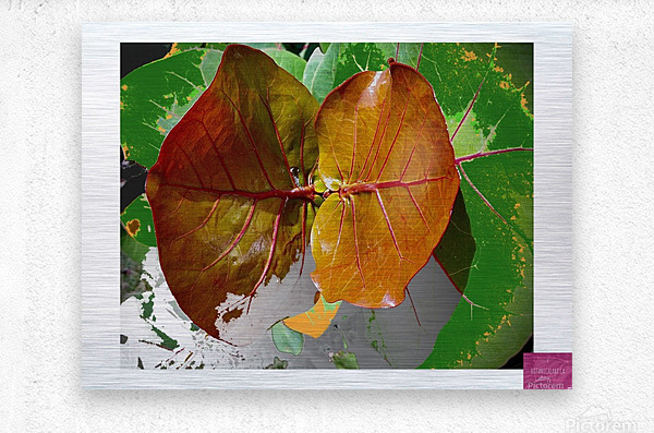 Tropical Tan Leaves  Metal print