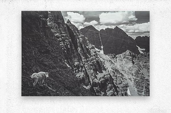 Pyramid Peak Mountain Goat  Metal print