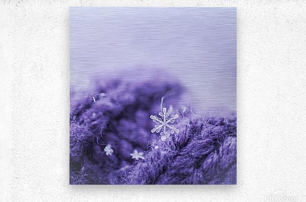 Purple Snowflakes  Metal print