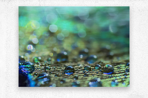 Shimmering Peacock Feather  Metal print