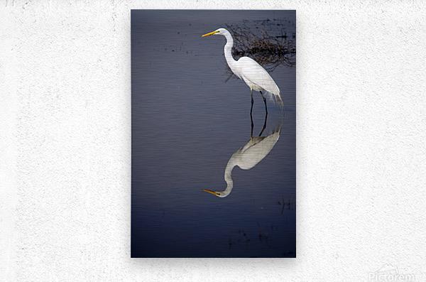 White Egret Reflection  Metal print