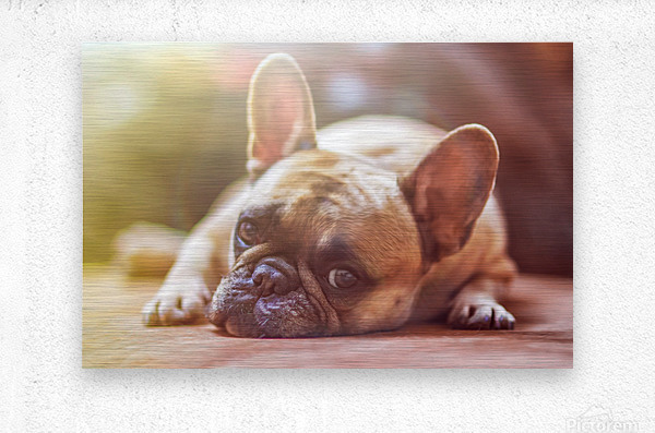 Sweet bully  Metal print