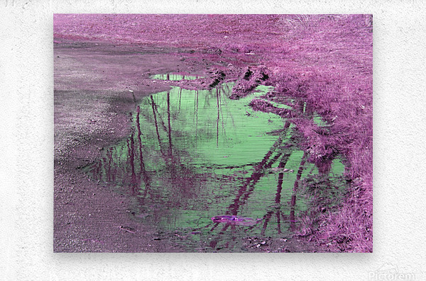 Value of a Puddle   Metal print