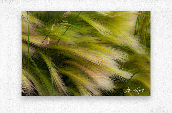 Grasses Of Summer  Metal print