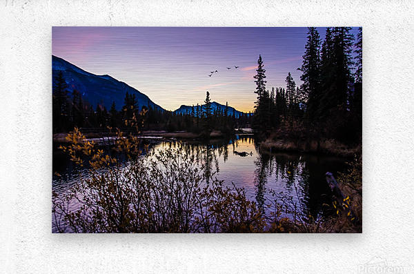 As Ducks Fly Policemans Creek Canmore  Metal print